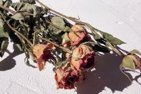 10月の誕生花:バラ